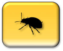 Make a Bug Report